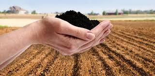 humic means of the earth